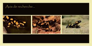Carte postale salamandre_recto_FRAPNA07